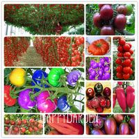 YHNOO 20 Pieces/Pack Rainbow plant for home garden