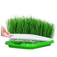 jusenda Sprout Plate Hydroponics System Grow Vegetable