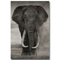 NICOLESHENTING Wild Animals Elephant Art Silk Fabric Poster Print 13x20 24x36inch Africa Nature Picture Home Wall Decor