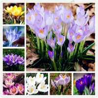 YHNOO 100pcs/bag Many varieties Flower Seeds plant for home