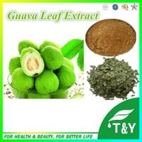 Hot Selling Guava Leaf  Extarct 10:1  400g
