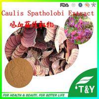 Wholesale Lower Price 100% Natural Caulis Spatholobi P.E. 800g