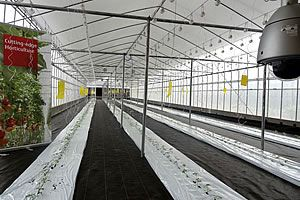 Figure 2. Greenhouse cultivation zone