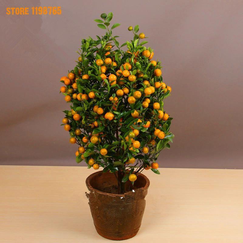 20 pcs/sac Juteux Doux Orange Graines, jardin Plantes Ligneuses Mandarin Orange Arbre Graines, Graines bonsaï Pour La Maison Jardin