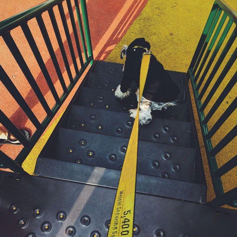 Mode collier laisse pour chiens animaux de compagnie chien ceinture de sécurité ceinture Pet laisse pour petit moyen grands chiens leader livraison directe LC0112