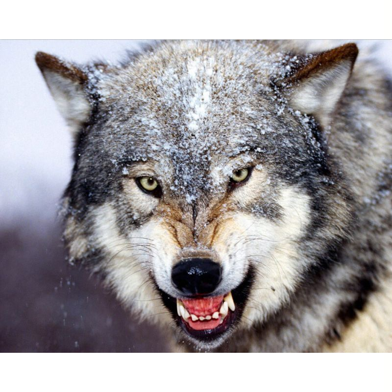Diamant stickerei Schnee wolf kopf Diy Diamant malerei kreuzstich Kit Tier 50 cm * 40 cm Full coverage 3d platz diamant mosaik