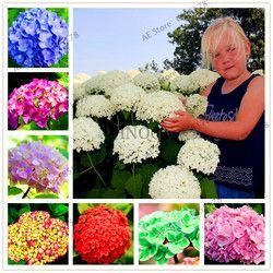 Большая распродажа! 20 шт./пакет Гортензия бонсай многолетний цветок Флорес для свадебной вечеринки завод для дома и сада 16 цветов