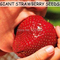 300 шт гигантский клубничный бонсай супер большие и красные Клубничные фрукты, технология бонзаи семена для бонсая растения подарок для сада...