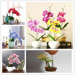 200 Орхидея бонсай красивый бонсай из цветов Бонсай легко выращивать фаленопсис комнатные растения бонсаи для домашнего сада