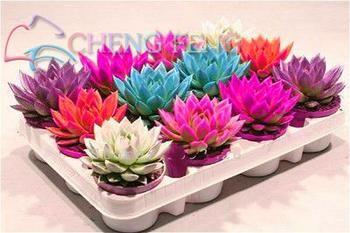 100pcs/bag Succulent bonsai Rare Lithops plants Bonsai Flower plants Cactus Diy Plant Potted Indoor Plants Flowers For Home Gard