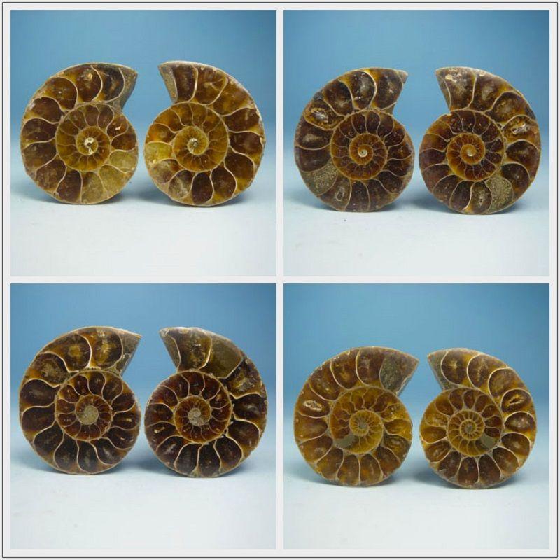 A pair of Natural Ammonite Fossil Specimen Shell conch Nautilus Pompiplius Ocean jasper Fish Tank Stones Healing 21mm--25mm