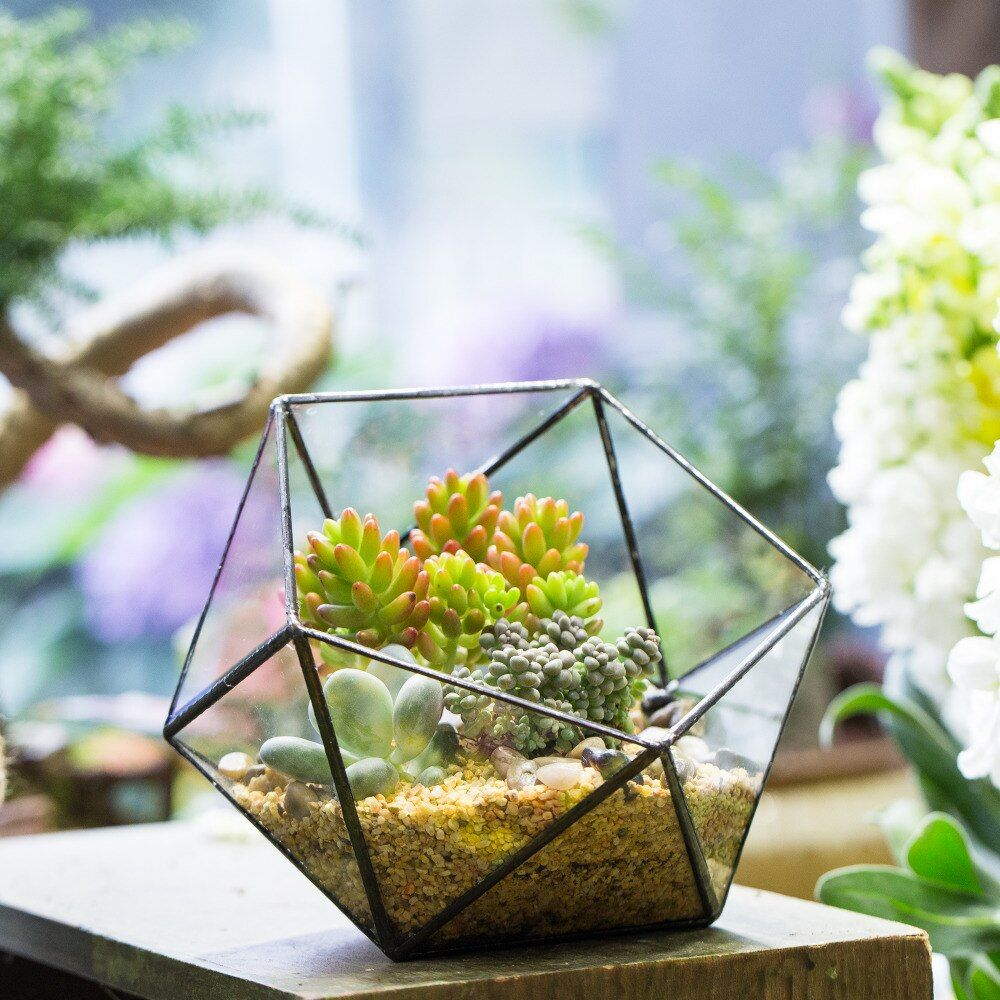 17 CM Bol De Table Forme Géométrique Verre Terrarium Fleur Bonsaï Pots Vase Jardin Plantes Succulent Planter Décoratif Pot de Fleurs