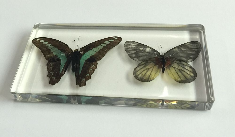 FREE SHIPPING Chinese Fashion Different Butterfly Paperweight Insect Specimen Taxidermy