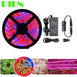 Plant Grow lights Full Spectrum LED Strip Flower phyto lamp 5m Waterproof Red blue 4:1 for Greenhouse Hydroponic + Power adapter