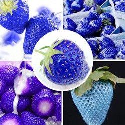MXLUODX Bleu Fraise Graines De Fruits Bio Graines Légumes Non-OGM Bonsaï Pot BRICOLAGE Maison Jardin Plantes 200 pcs