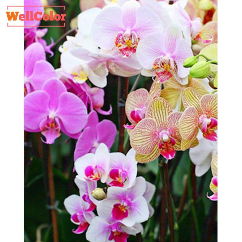 Wellcolor 5D поделки алмазов картина вышивка крестиком цветы орхидеи наборы алмаз Вышивка узор Rhinestons 3D Мозаика рукоделие