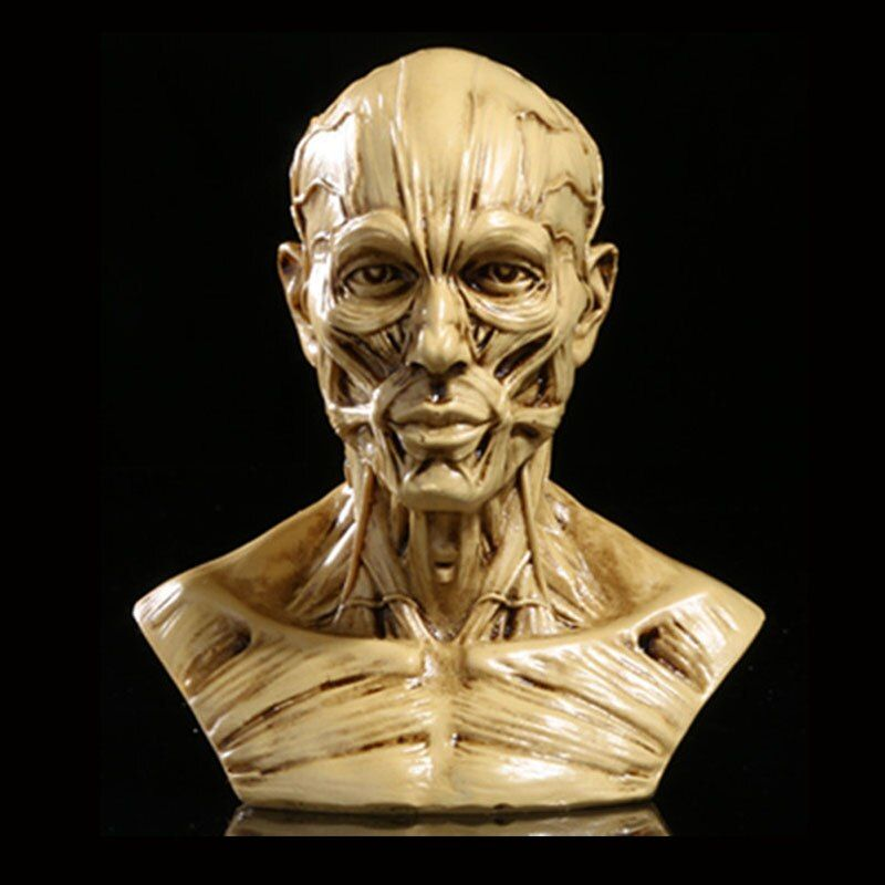 MRZOOT Resin Craft Art Painting Statues For Model Replica Decoration Skull Home Accessories Model Medical