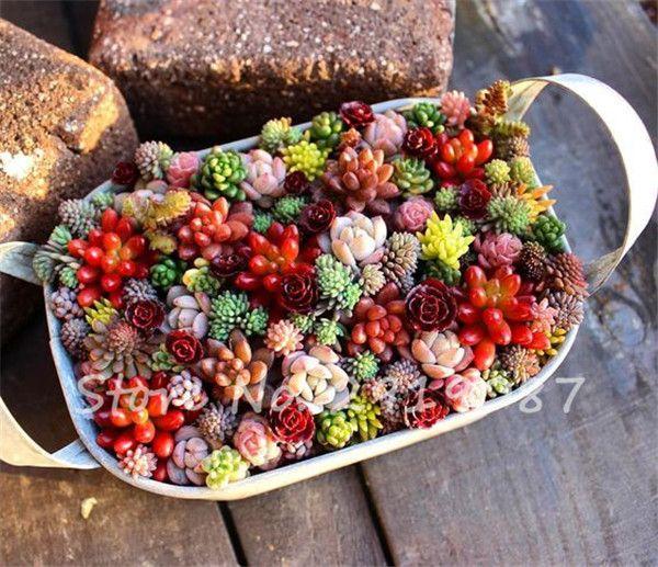 200 PCS Mix Lithops Seeds Living Stone Flower Seeds Succulent Plant Garden Decoration Mini Bonsai Seeds
