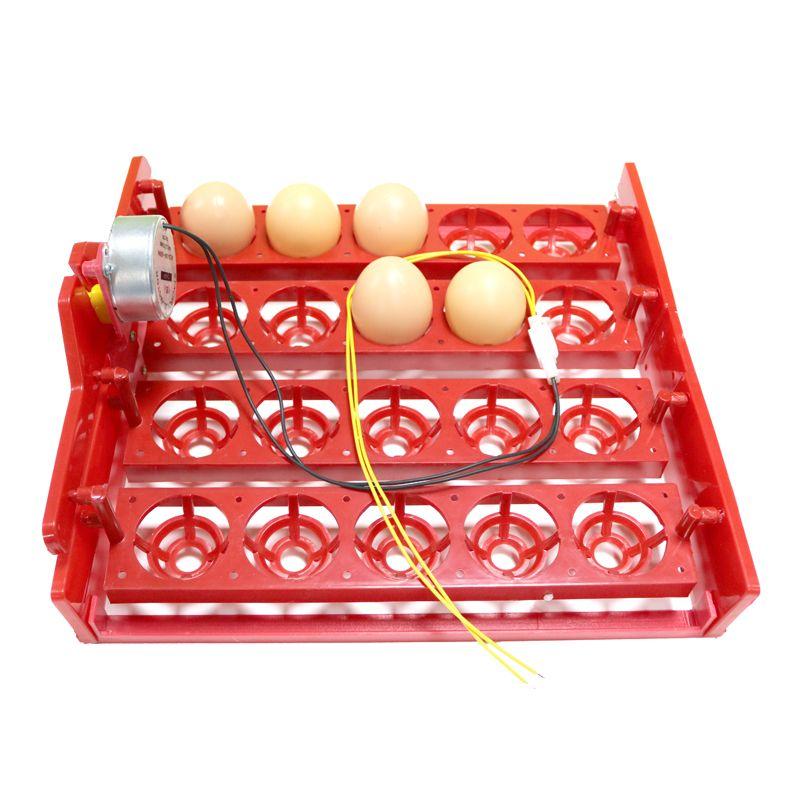 20 oeuf incubateur tourner oeufs plateau aubergtesteur automatiquement tourner les oeufs expérimental équipement d'enseignement tension 220 V/110 V/12 V