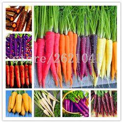 500 pcs/sac carotte graines, fruits légumes graines, 9 couleurs à choisir, doux et sain, usine pour accueil jardin