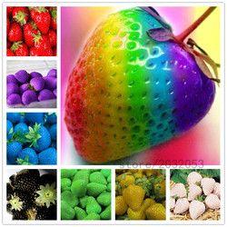 300 pcs/sac arc-en-fraise graines, géant fraise, rare bonsaï graines de fruits bio, 9 couleurs, fraise plantes pour la maison jardin