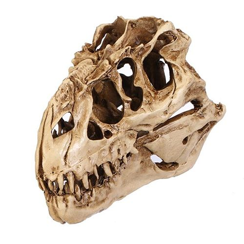 ZOOYOO Resin Crafts Dinosaur Tooth Skull Fossil Teaching Skeleton Model Halloween Home Office Halloween Decoration Drop Shipping