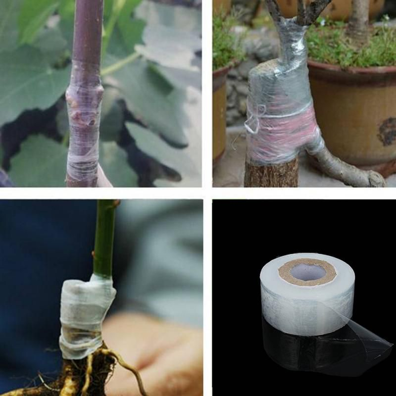 100m Self-adhesive Fruit Tree Grafting Tape Plants Tools Nursery Stretchable Garden Flower Vegetable Grafting Tapes Supplies