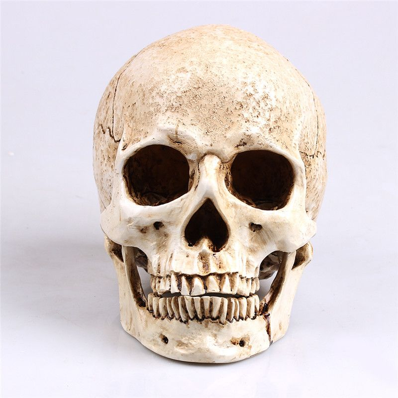 Art painting Model Human Head Model Resin Replica In Natural Size 1: 1 Halloween Decoration Medical Home Decorative Crafts Skull