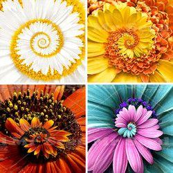 Nouvelle Arrivée 30 pcs Un Miracle Marguerite graines hardy bonsaï plantes rares graines de fleurs ornementales fleurs