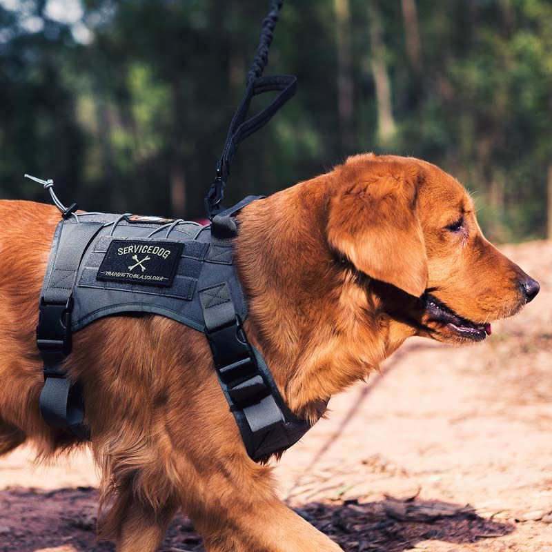 OneTigris Dog Harness Vest for Walking Hiking Hunting Tactical Military Water-Resistant MOLLE Training Harness for Service Dog