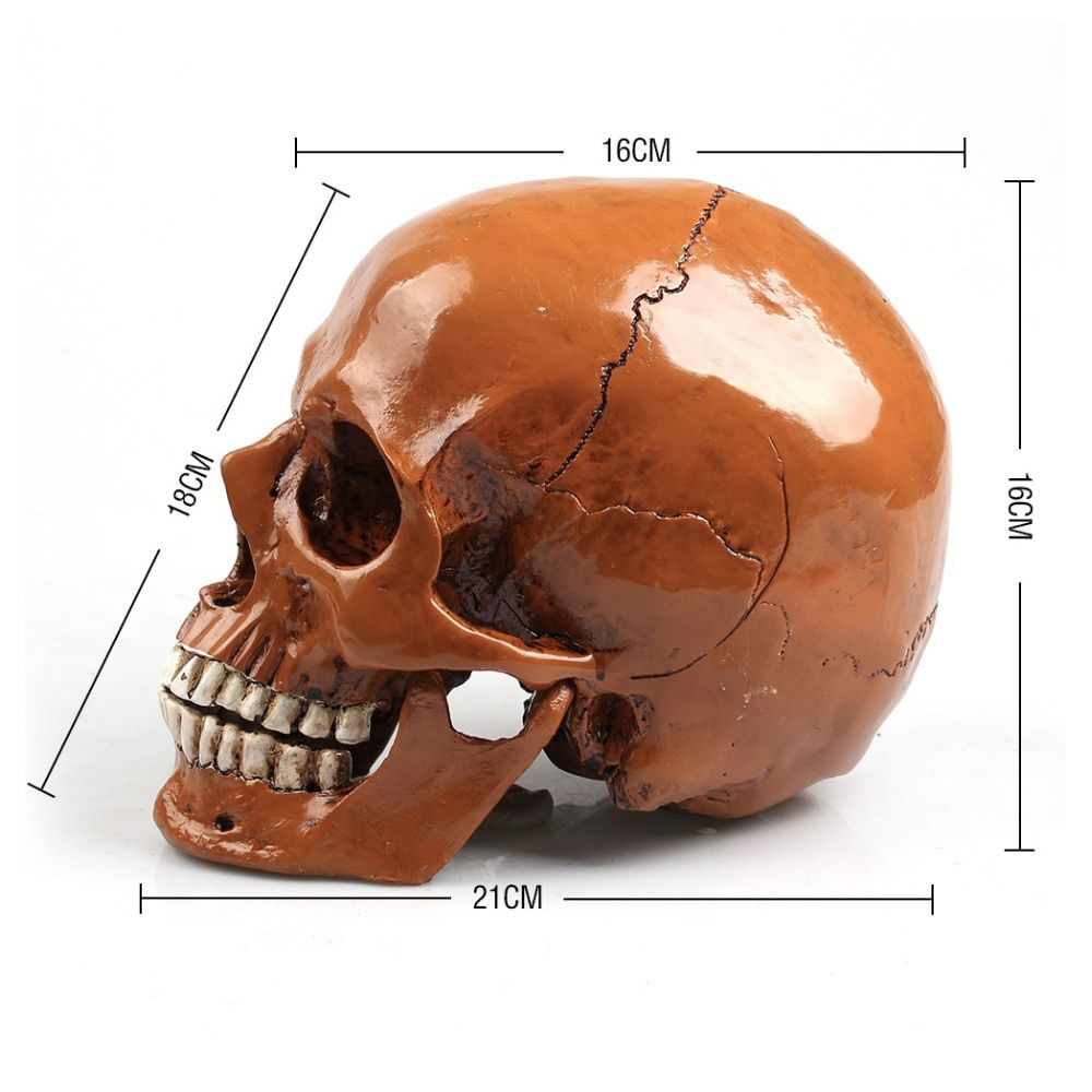 P-Flame Human Skull Replica Resin Model Halloween Props Realistic Lifesize 1:1 Horror Party Decoration High Grade Medical Skull