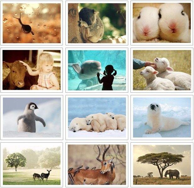 El Envío Gratuito! bentoy Naturaleza Animales postales/Tarjeta de Navidad/Tarjeta de Felicitación/32 unids/set Postal de Regalo