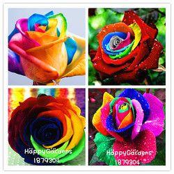 Livraison gratuite 100 Graines/pack Rares Hollande Rainbow Rose Graines Fleur Jardin rare rainbow rose graines de fleurs