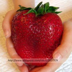 200 pcs/Géant fraise graines rare Organiques comestibles graines de fruits en Bonsaï, organique fruits fraise graines pour La Maison jardin Plantes