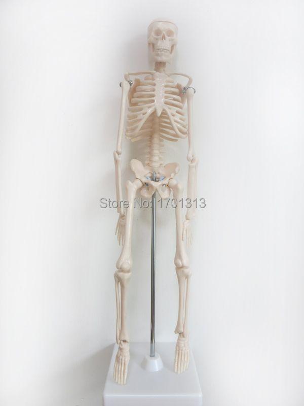 45cm human skeleton model Special medical decoration Family personalized Halloween decorative Figurines scheletro umano