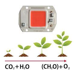 10 шт./лот Led Grow Light Cob Чип 220 В/110 в полный спектр для растений цветок овощи фрукты светодиодные теплицы растение растет свет часть