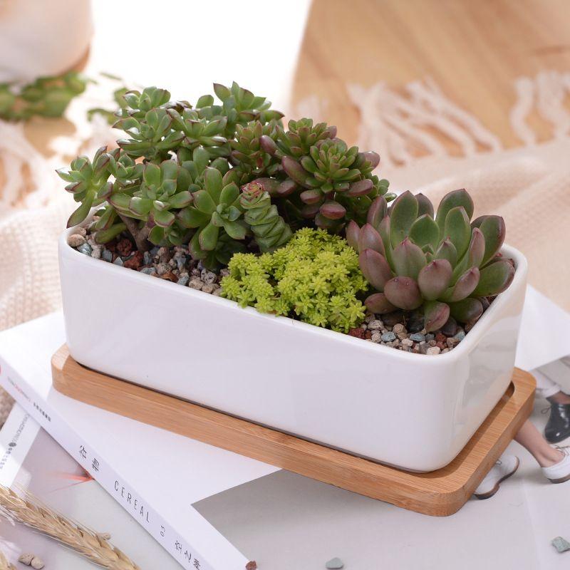 1 Set minimaliste Rectangle blanc en céramique succulente plante Pot porcelaine bureau Pot de fleur Zakka décor à la maison (1 Pot + 1 plateau)