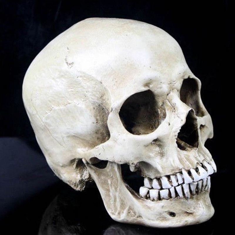 P-Flame <font><b>Human</b></font> Skull Resin Replica Medical Model Lifesize 1:1 Halloween Home Decoration High Quality Decorative Craft Skull