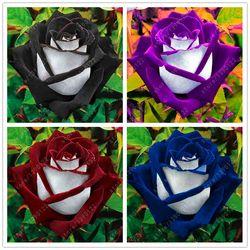 200 pcs/sac rose graines, noir Rose avec Blanc Rouge Bord, bonsaï graines de fleurs belle rose pétales pot pour la maison jardin