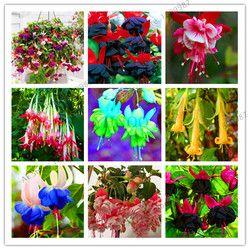 Акция по потере! фиолетовые двойные лепестки фуксия Флорес бонсай горшечные цветы растения для дома украшения сада