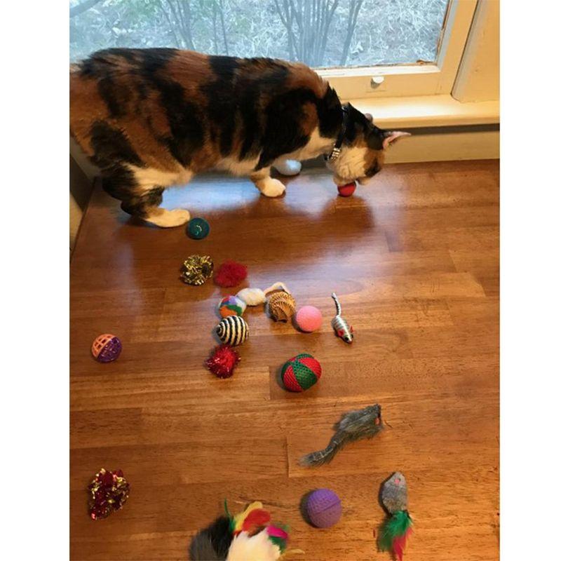 Westrice 18 различных Малый Мини-игральные Мышь Игрушечные лошадки подарок для Товары для кошек Товары для собак котенок значение Pet Игрушечные ...