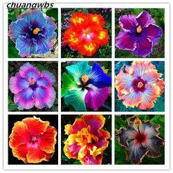 100 PCS Géant Hibiscus Fleur Graines Hardy, rare maison fleur pour le BRICOLAGE Jardin en pot ou cour fleur plante meilleur cadeau pour fille kid