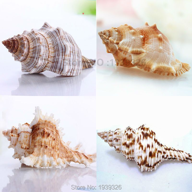 Натуральный большой раковины 5-10cm * подарок 60 шт. маленький белый раковины аквариумных рыб украшения средиземноморской пляжной Конча море В ...