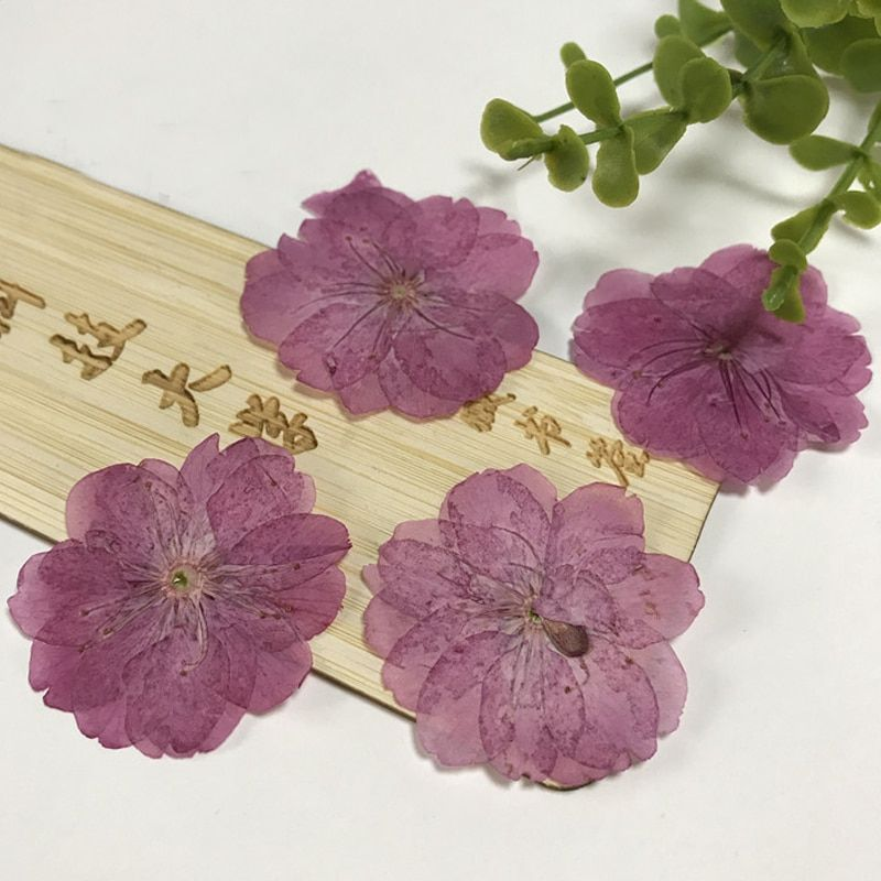 Hot Selling Original Color Cherry Iphone Case Pressed Flowers For Postcard Real flowers free shipment 1 lot/120 Pcs