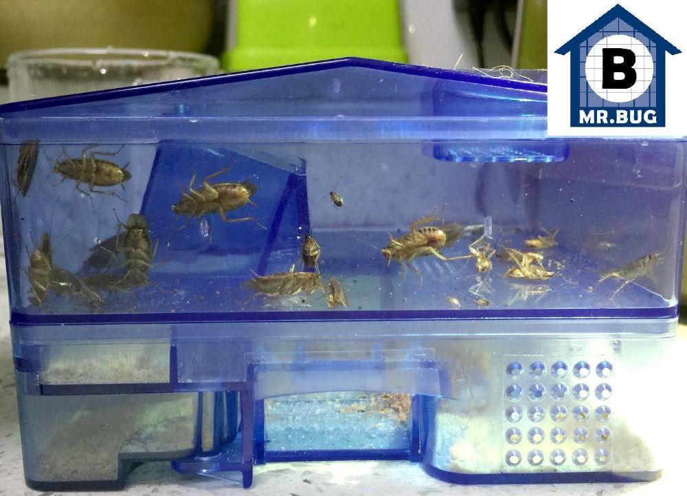 Pièges pour Cafards Cafard Receveur Box Viennent avec Appât, Cock Roach Répulsif Tueur Lutte Contre Les Insectes Ravageurs Sûr et Non-toxique