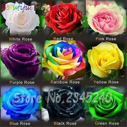 120 PCS Fleur Semences Hollande Rose Semences Amant Cadeau Orange Vert Arc-En-RARE 23 Couleur À Choisir La Maison BRICOLAGE Jardinage fleur