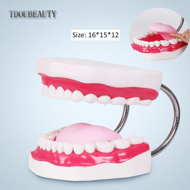 TDOUBEAUTY Six fois grossissement bouche complète modèle d'enseignement des dents modèle dentaire la présentation de haute qualité livraison gratuite