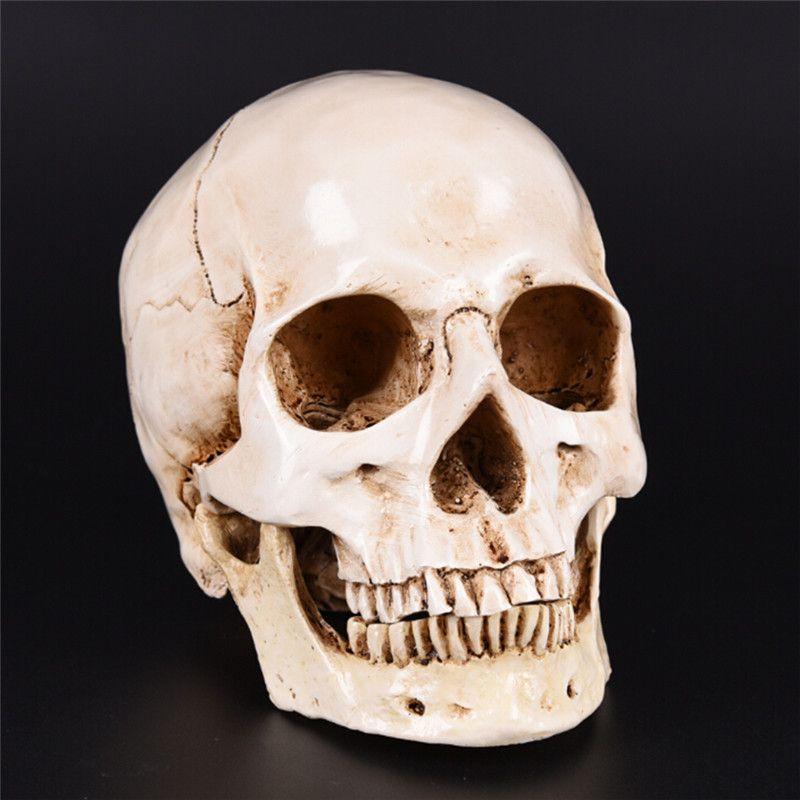 Human Head Resin Replica Medical Model Lifesize 1:1 Halloween Home Decoration High Quality Decorative Craft Skull