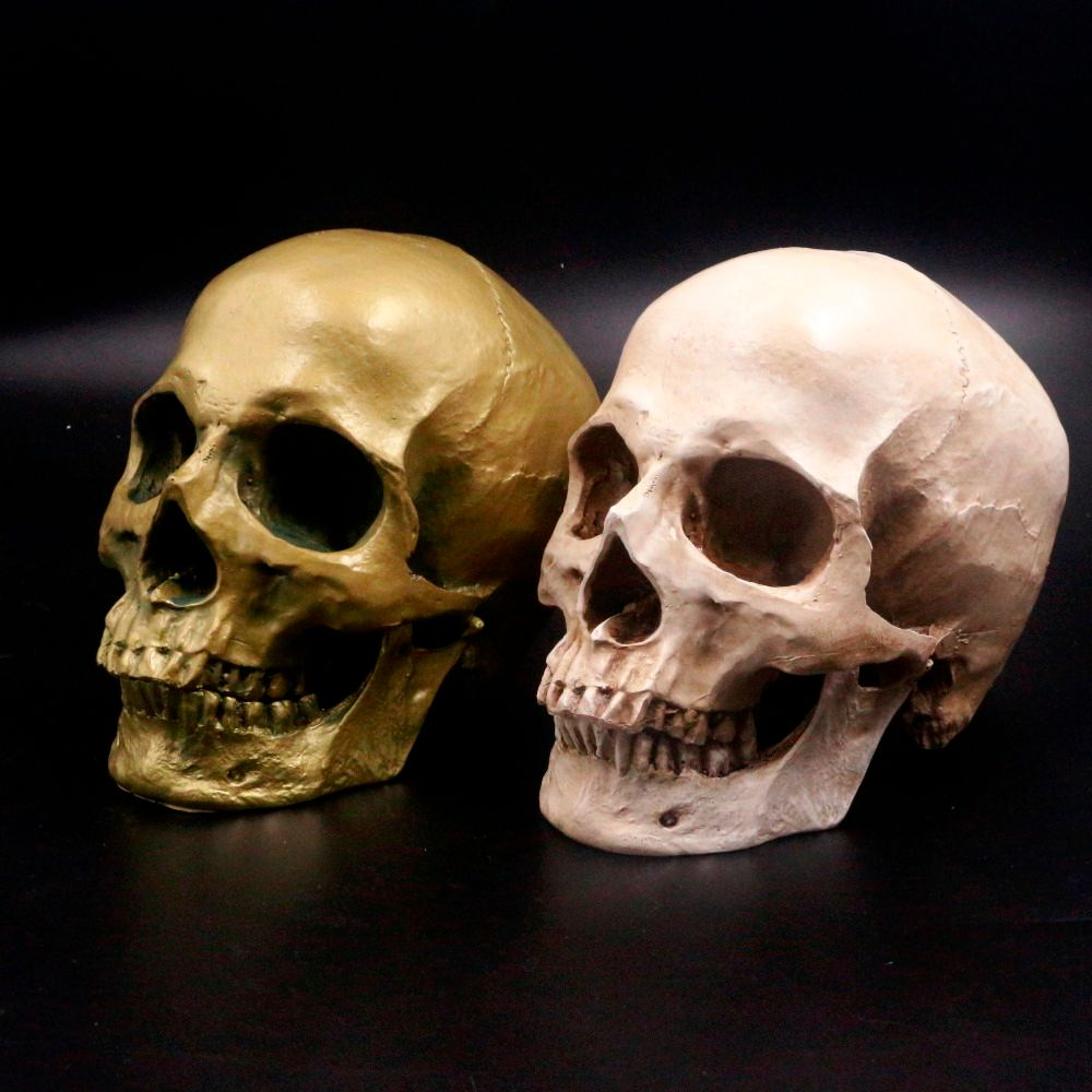 Human Skull Lifesize 1:1 Resin Replica Medical Model Aquarium Ornament Fish Tank Waterscape Cave Halloween Home Decoration