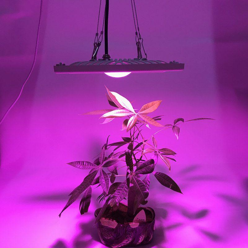 Étanche IP65 spectre complet 300 W 600 W LED pousser la lumière pour la culture hydroponique à effet de serre lampe à LED adapté aux plantes d'intérieur en plein air
